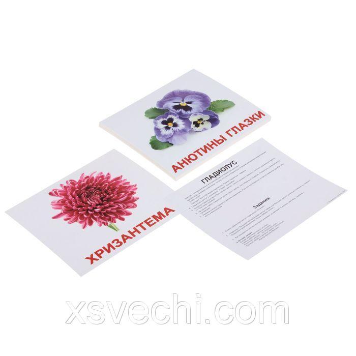 """Обучающие карточки """"Цветы"""""""