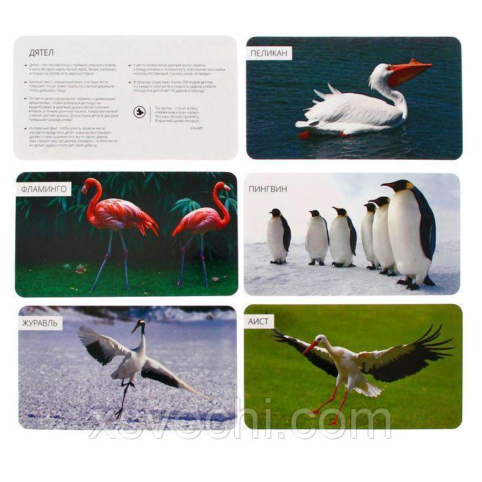 """Обучающие карточки """"Удивительные птицы"""""""