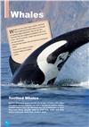 humpback whale (+ Cross-platform Application) by Virginia Evans, Jenny Dooley